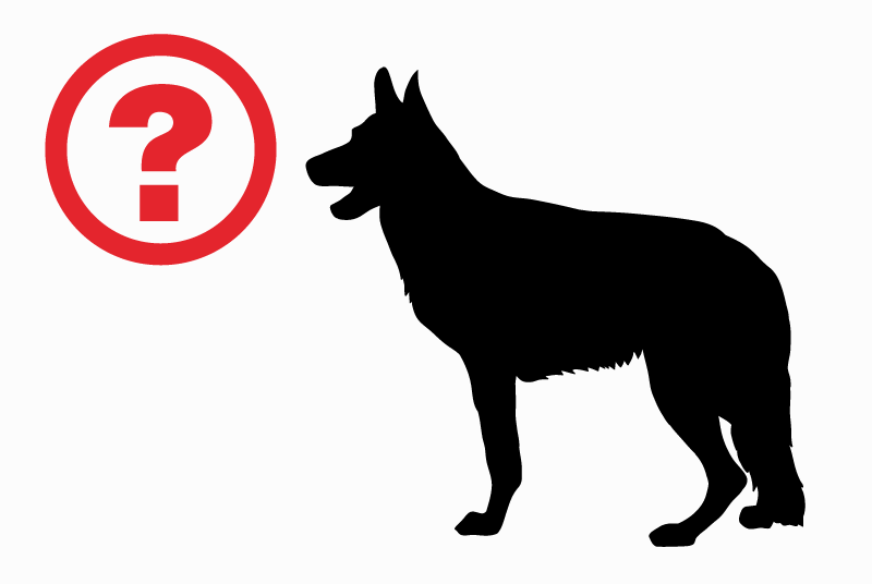 Discovery alert Dog  Unknown , 5 years Ixelles Belgium